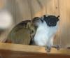 Zwillingsgeburt im Thüringer Zoopark Erfurt